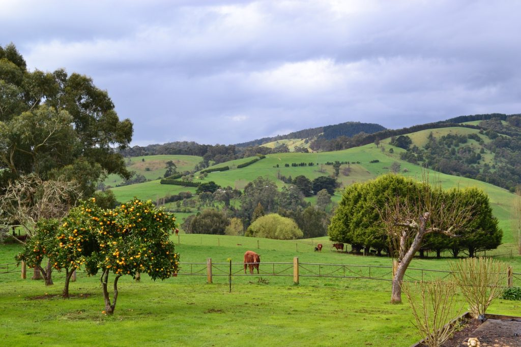 Gippsland farm land